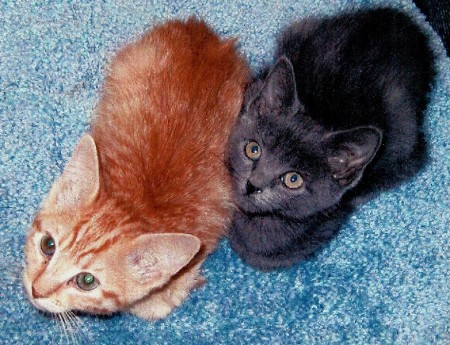 Sammi & Dessa as kittens
