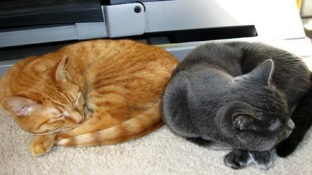 Sammi and Dessa Cats