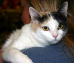 Cat at Redlands Shelter