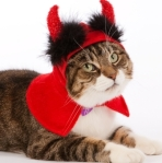 Cat in Halloween Devil outfit