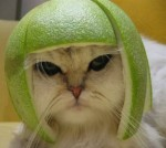 White cat with helmet hat costume