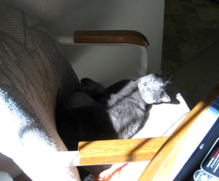 Dessa sunning on chair