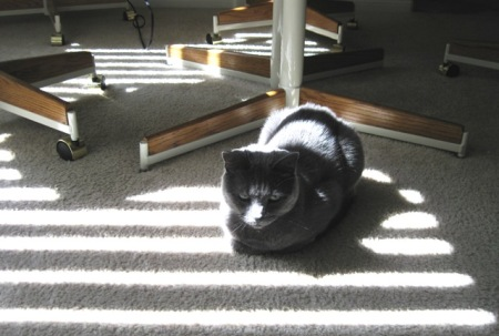 Dessa and sun rays on floor