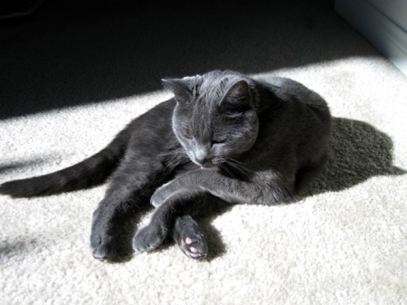 Dessa in sun washing paw