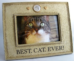 "Cat Frame with words ""Best.Cat.Ever"""