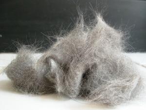 Cat hair