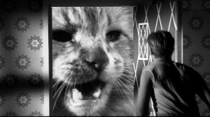 Orangey looking fierce in The Incredible Shrinking Man