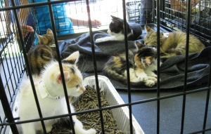 A group of kittens ready for adoption