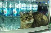 Cat cooling off